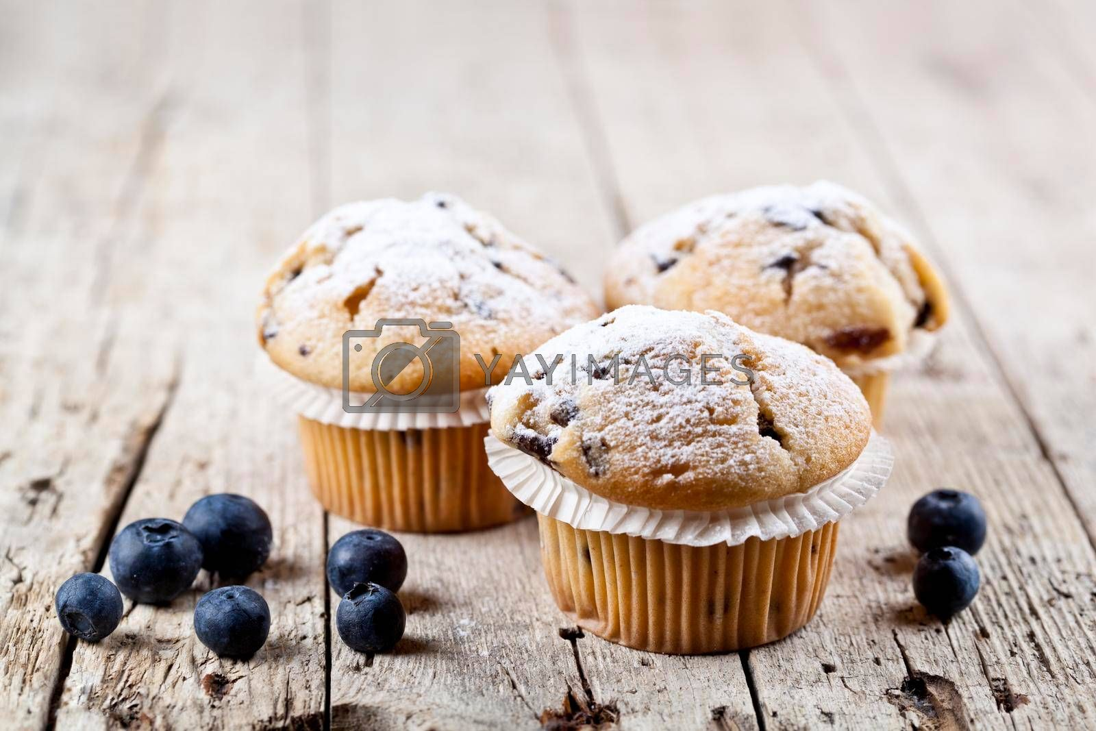 Three fresh baked homemade muffins with blueberries on rustic wooden table background.