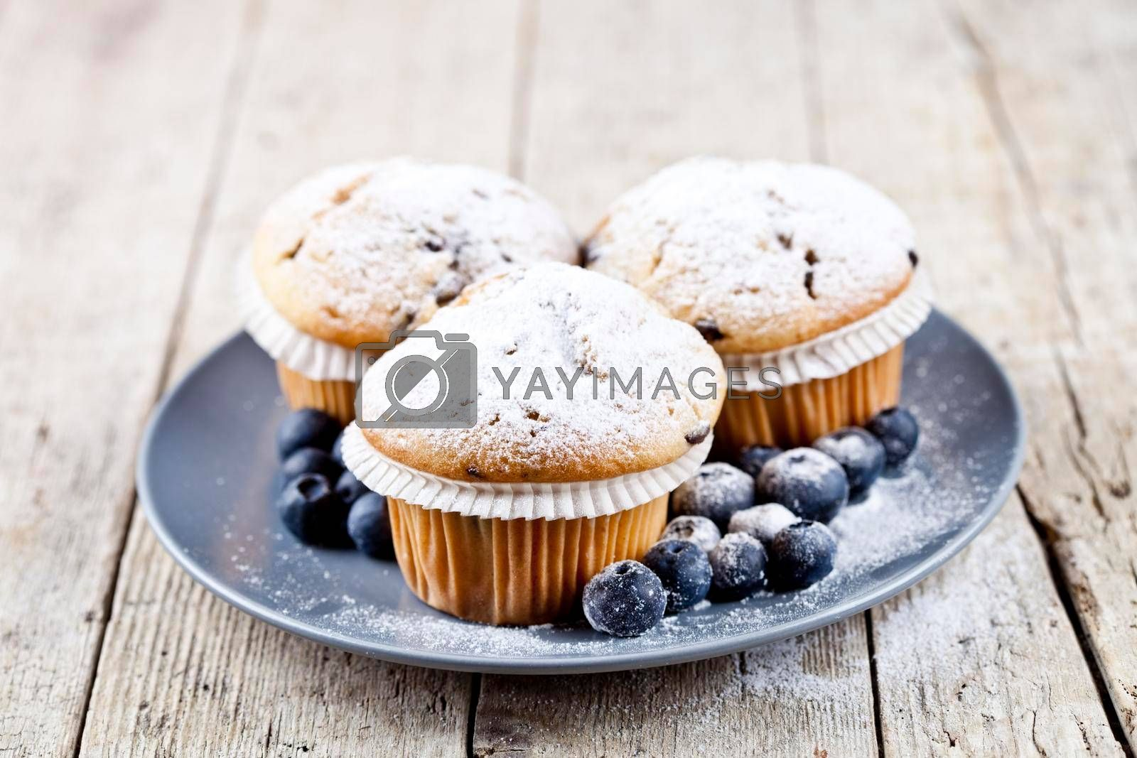 Three homemade fresh muffins with sugar powder and blueberries on ceramic plate closeup on rustic wooden table background.