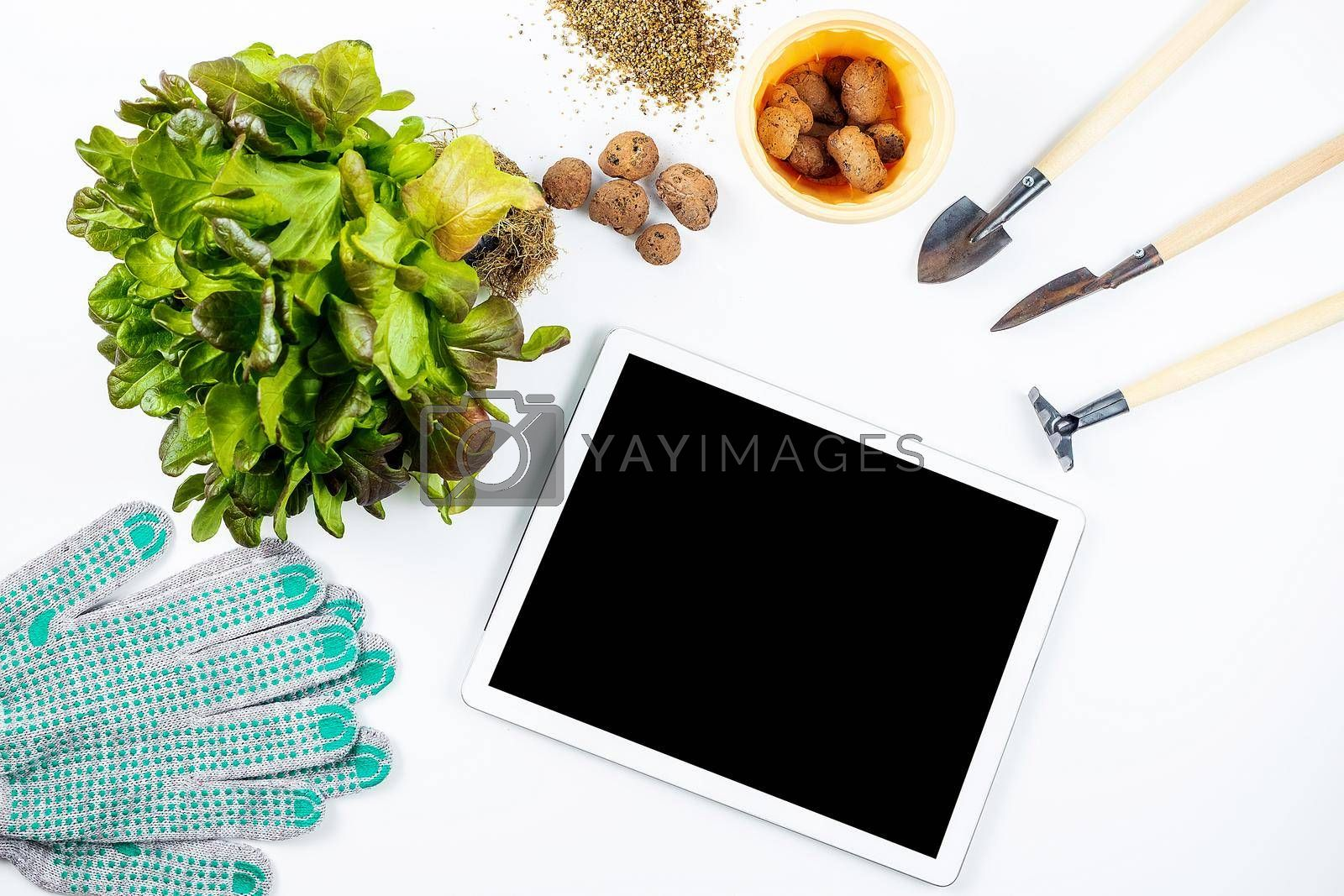 Home gardening concept, online training. On a white table are small tools for home gardening: shovels and rakes, garden gloves, expanded clay, a plant for transplanting, a tablet and flower pot.