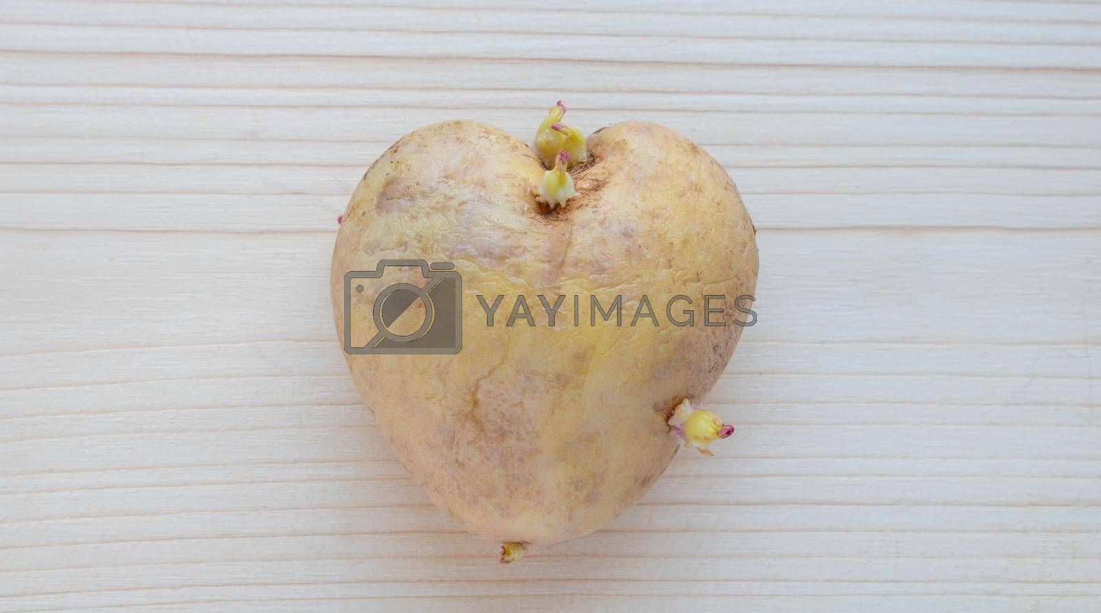 An unusual heart-shaped potato with sprouts lies on a wooden board on the table.