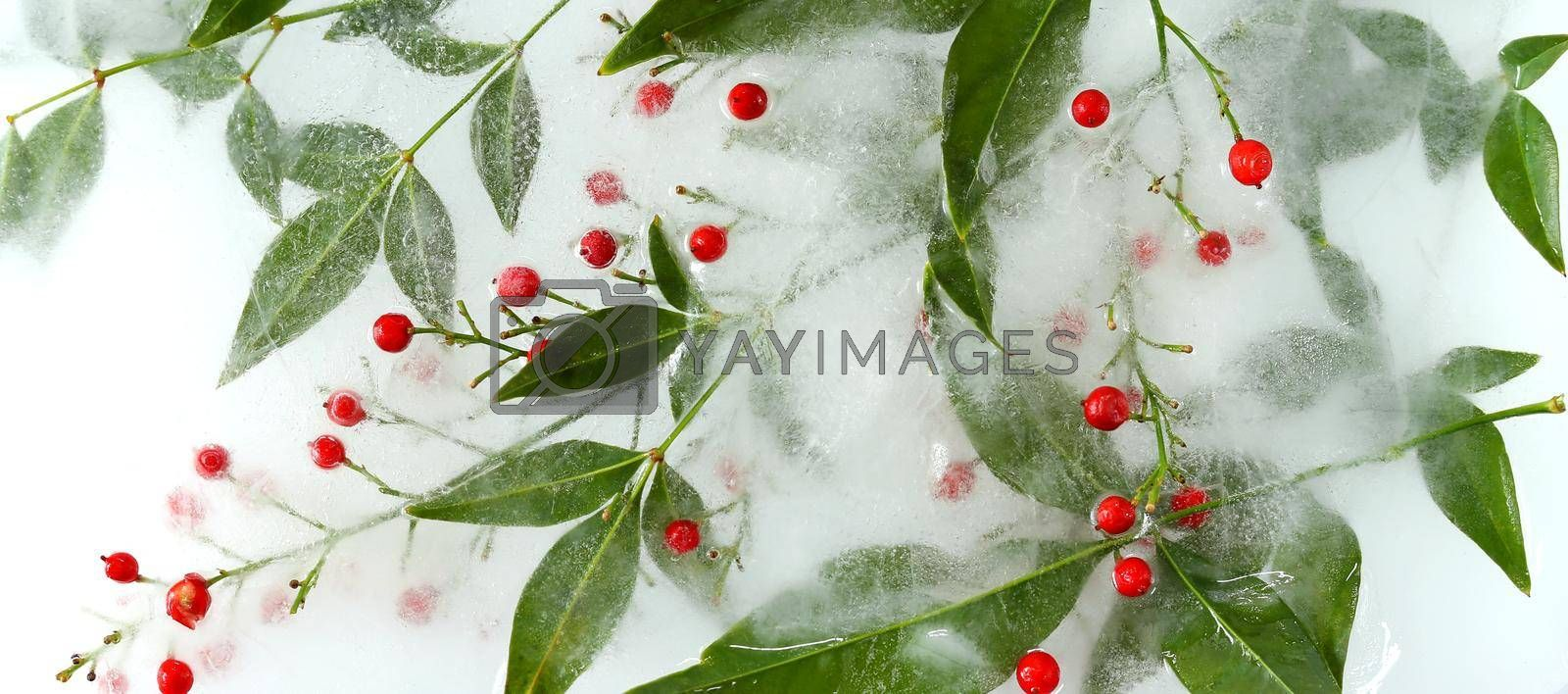 Frozen flowers. Japanese bamboo with red berries, top view. Beautiful flowers arrangement