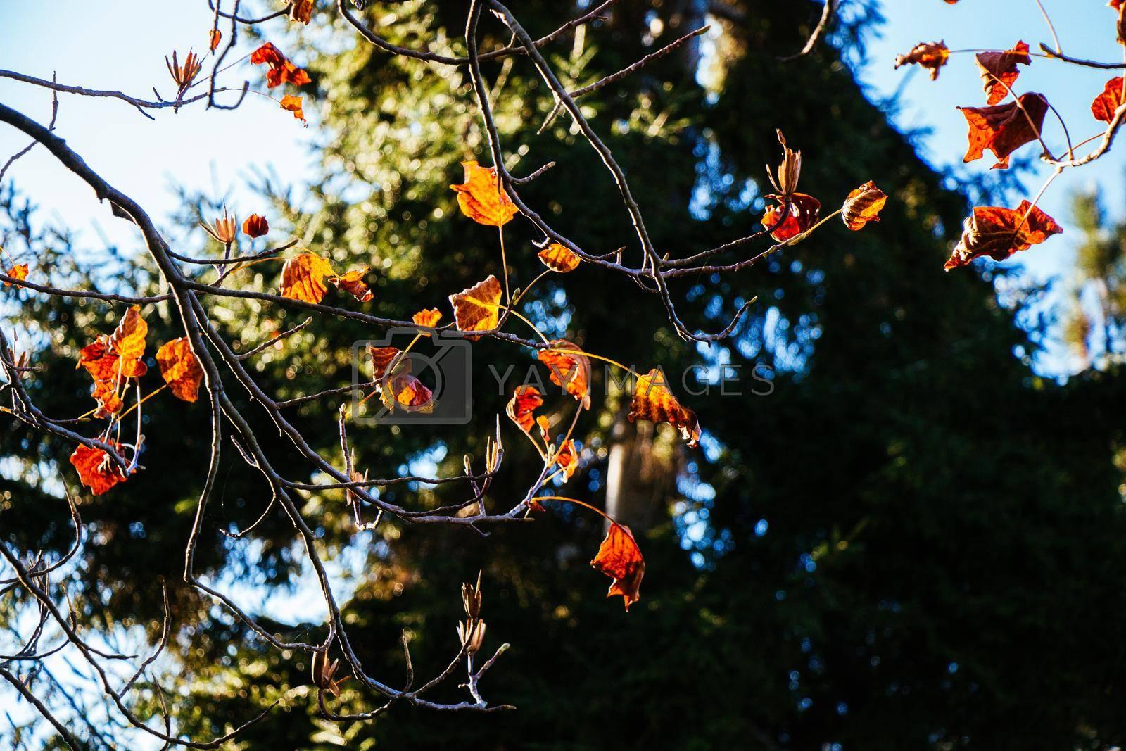 Autumn tree  leaves texture background. leaf background texture