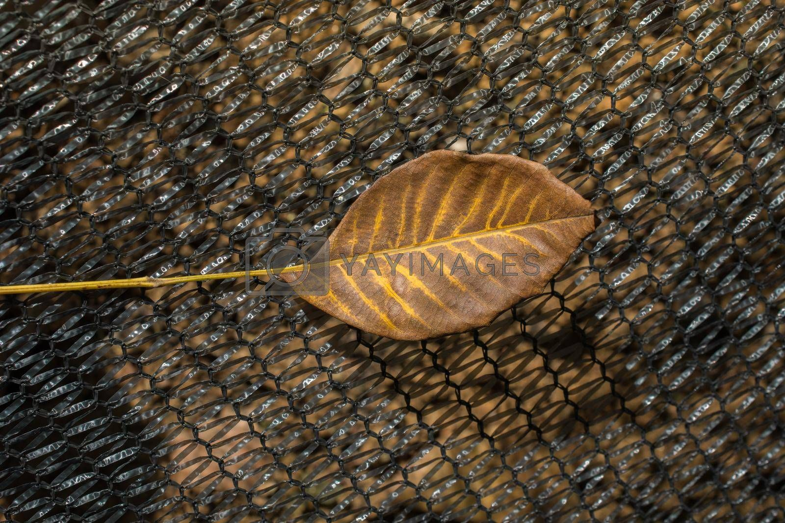 One separate dry leaf  of Autumn times