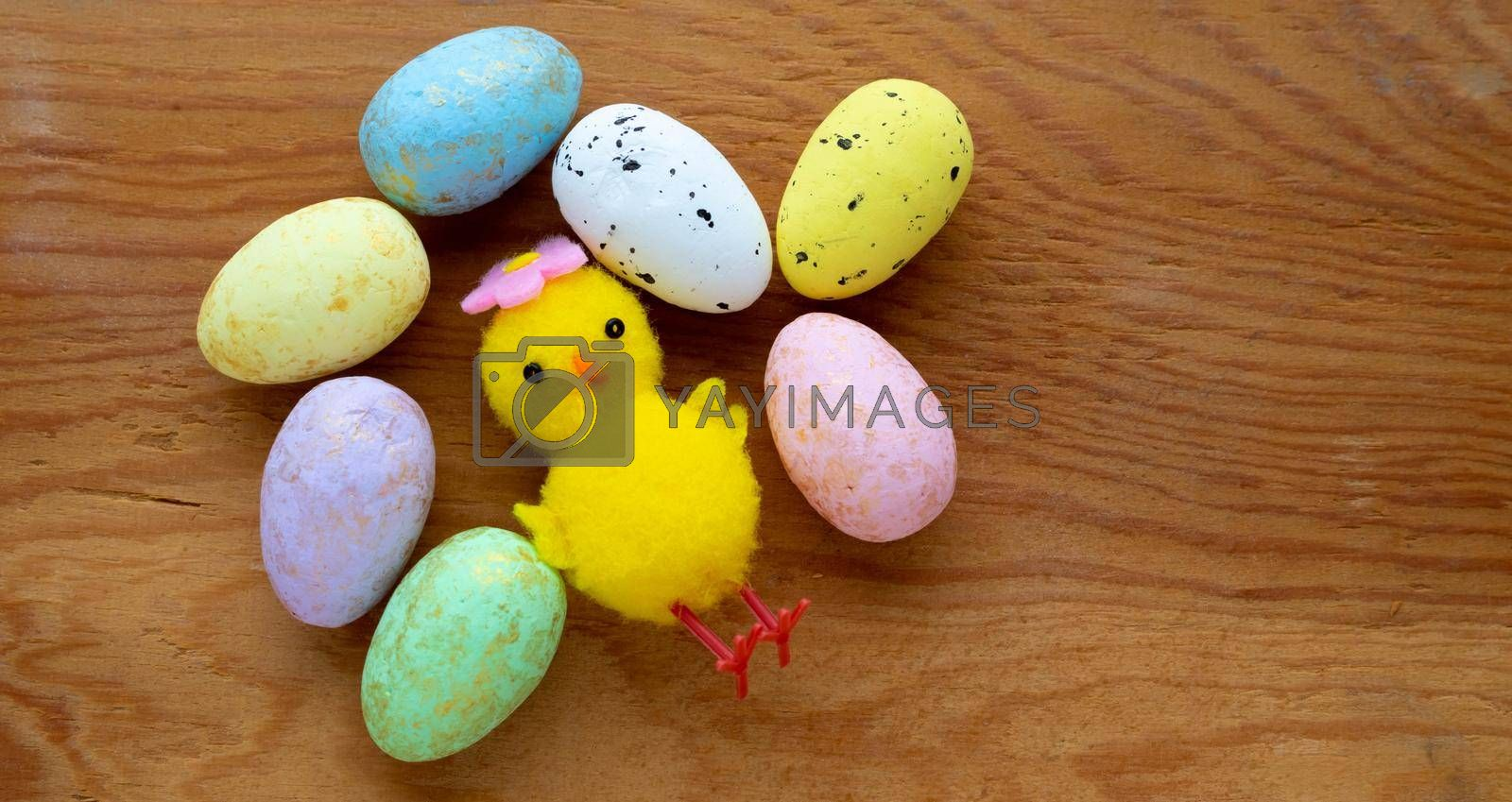 Colorful Easter toy eggs and a yellow toy chicken on a wooden background.The Concept Of Easter. Space for your text by lapushka62