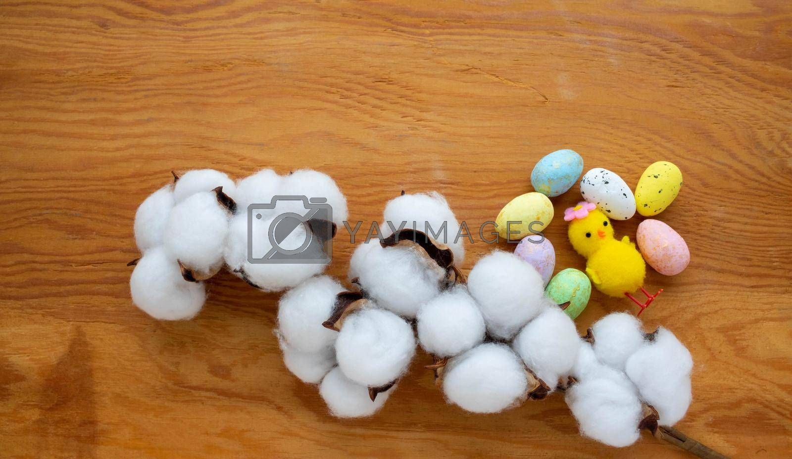 Dried white fluffy cotton flower, chicken and small colored eggs on a wooden background, close-up, copy space, top view. The concept of Easter.