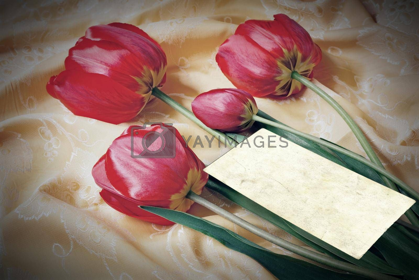 One big beautiful tulip of bright red color against the beautiful draped yellow silk. It is presented by a close up