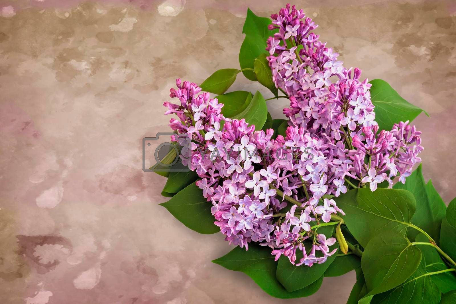 Beautiful lilac flowers among the green leaves. Presented close-up