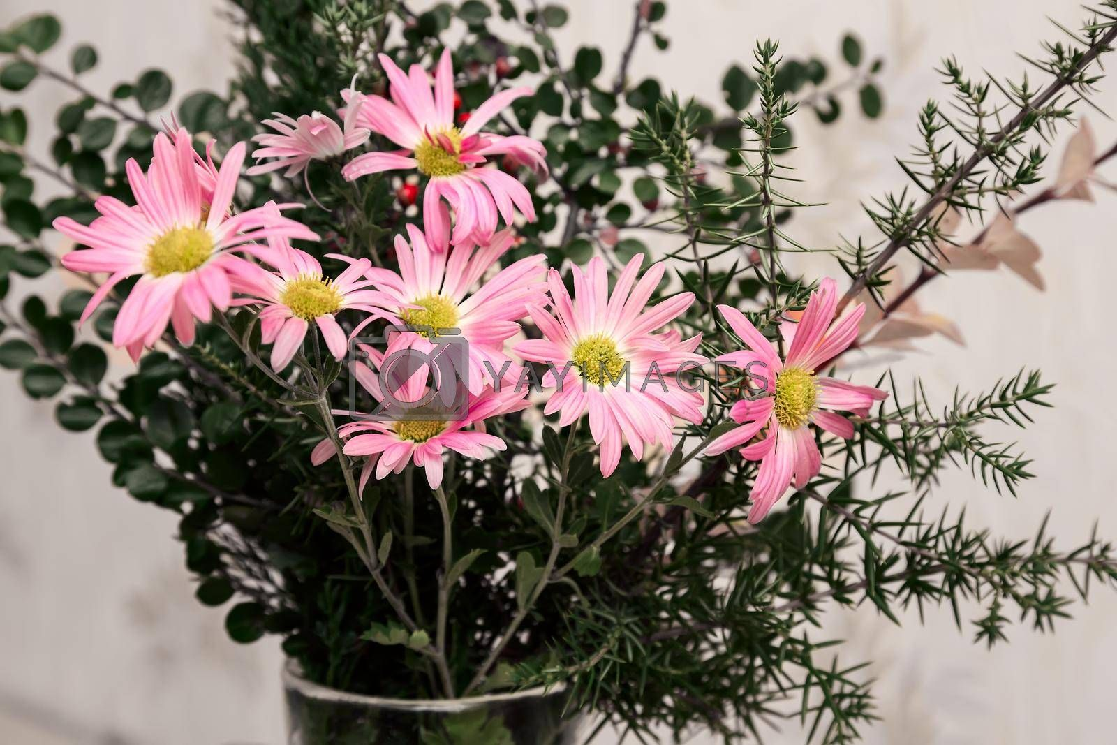 On the table in a glass vase bouquet of beautiful pink autumn chrysanthemums.