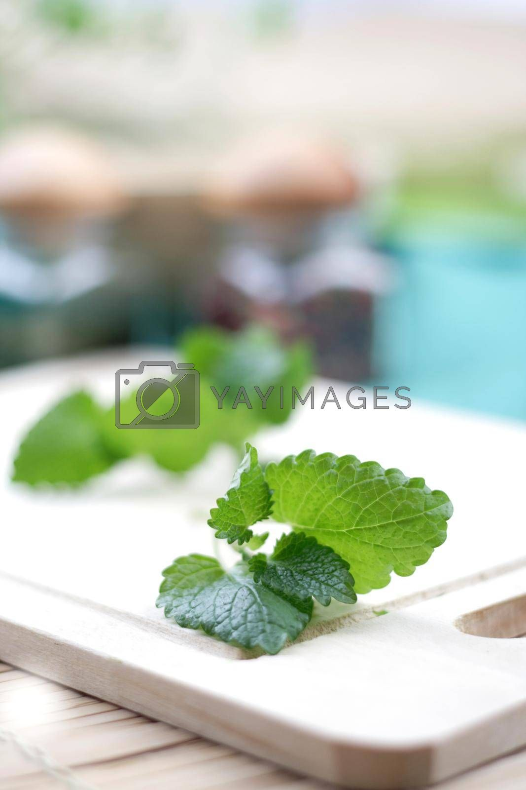 Close up of fresh mint