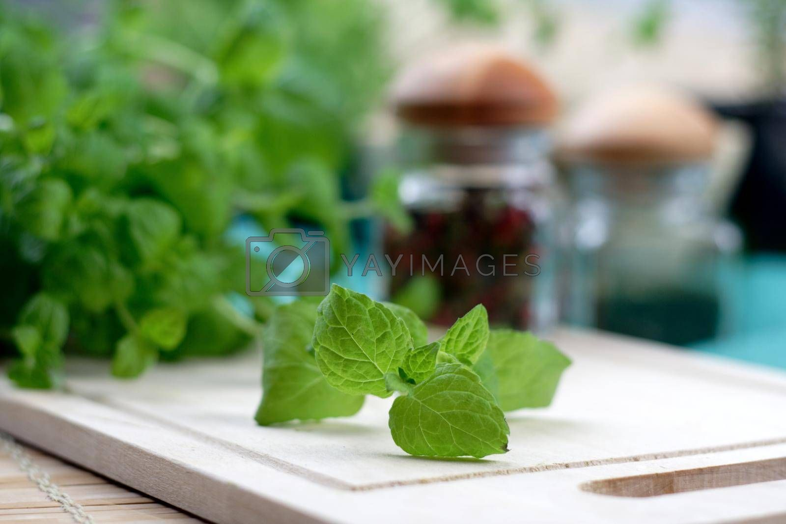 Studio shot of fresh oregano