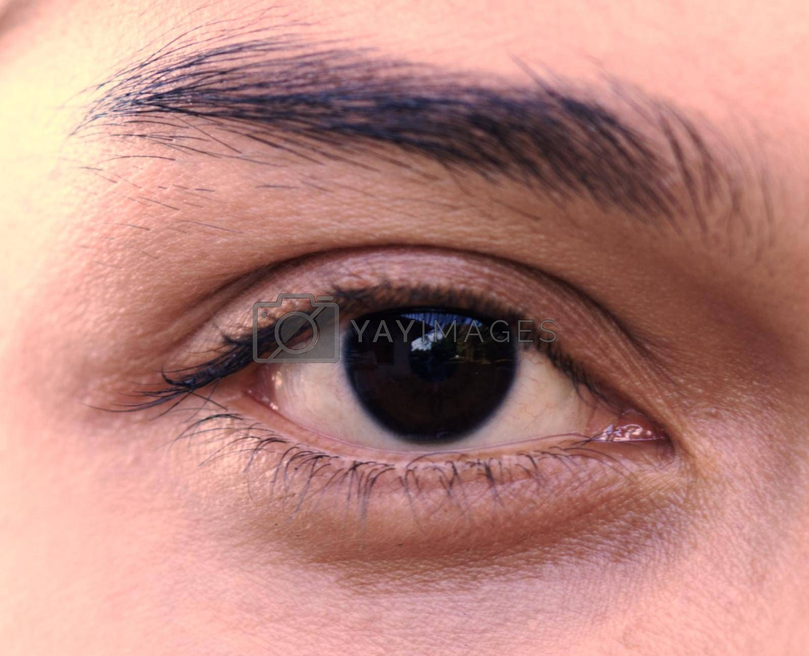 Close up of one eye, young Asian woman has beautiful eyebrows, concept of treatment of capillary iris.