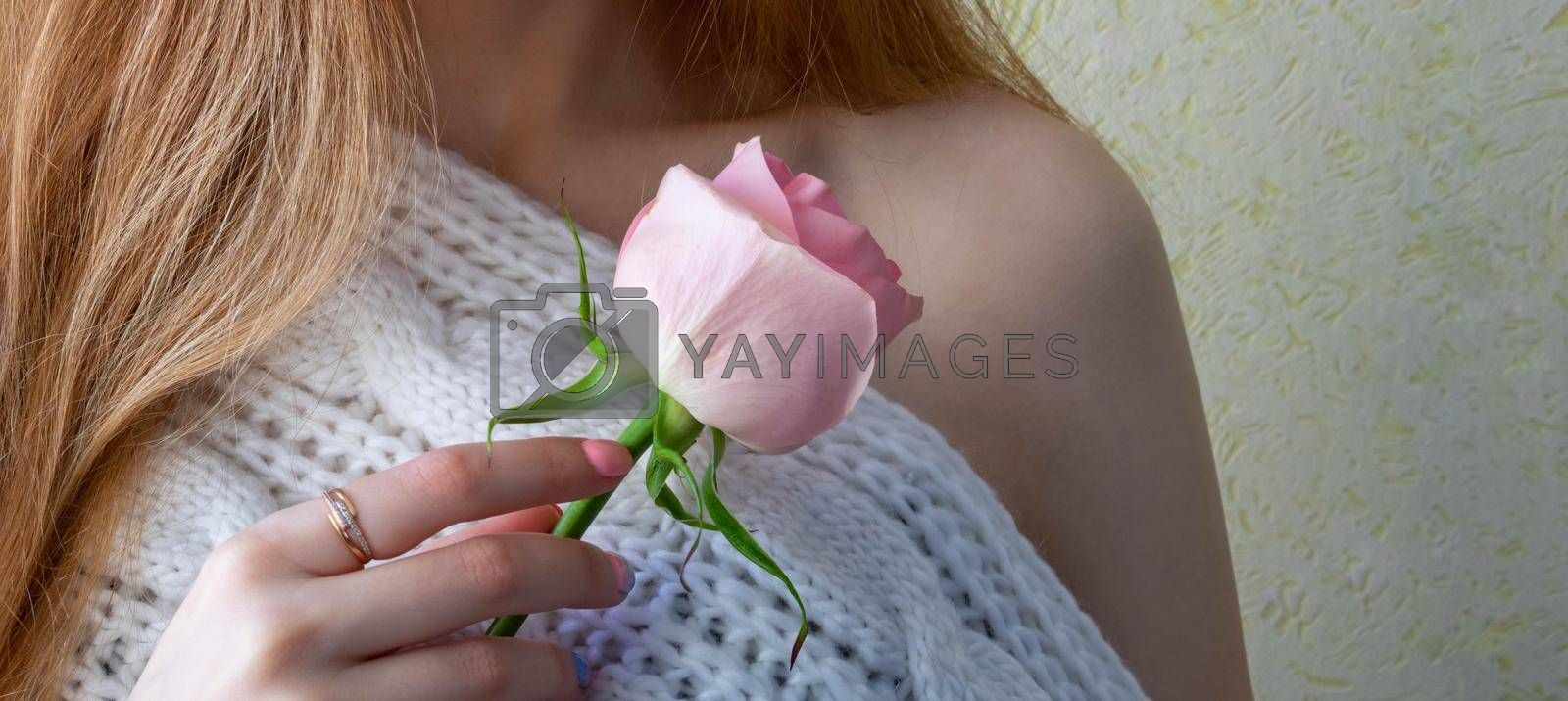Hands of a young girl holding a pink rose. Space for your text by lapushka62