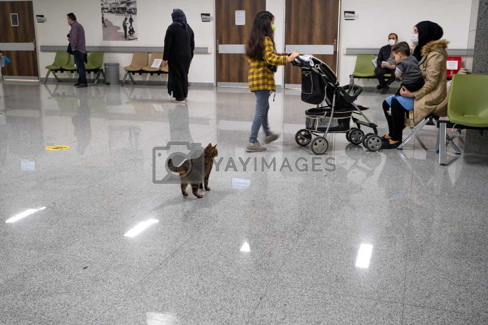 a cat approaches to a girl and mother with hijab sitting and other patients around