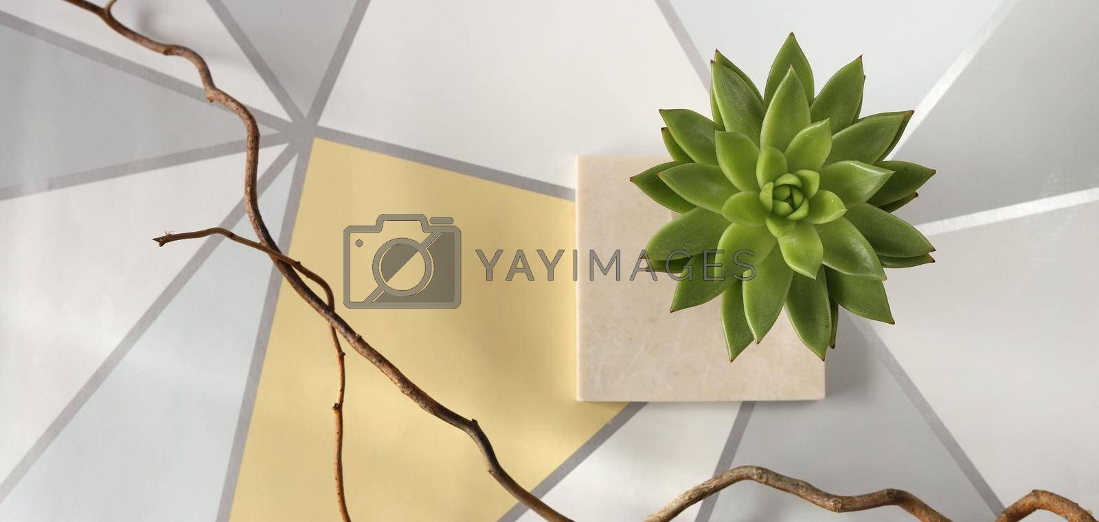 Scandinavian still life top view. House plant on marble on grey yellow background.