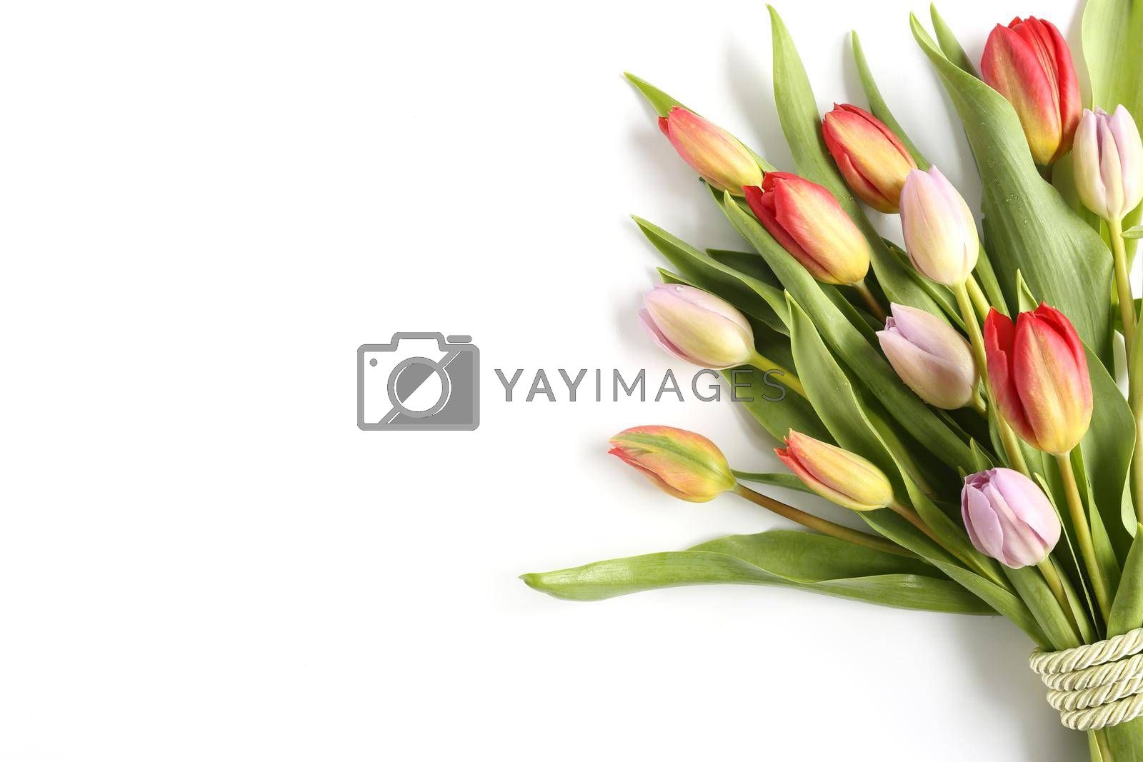 Beautiful fresh bouquet of spring flowers tulips on white background. Spring, celebration, birthday, Mothers day, invitation, congratulation, gift concept. Card, banner, mock up, poster spring mood