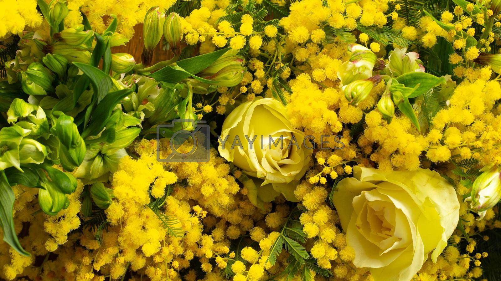 Flower background in yellow colour, Yellow Spring flower mimosa, white roses. Close up. Flat lay border