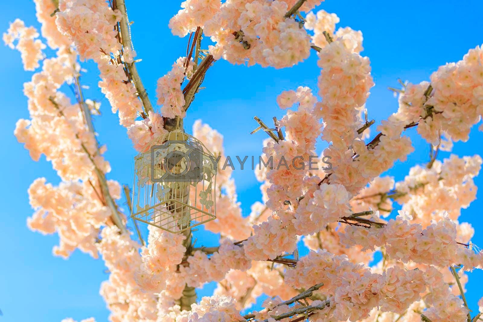 Decoration of blooming cherry flowers. Spring concept. Against the blue sky.