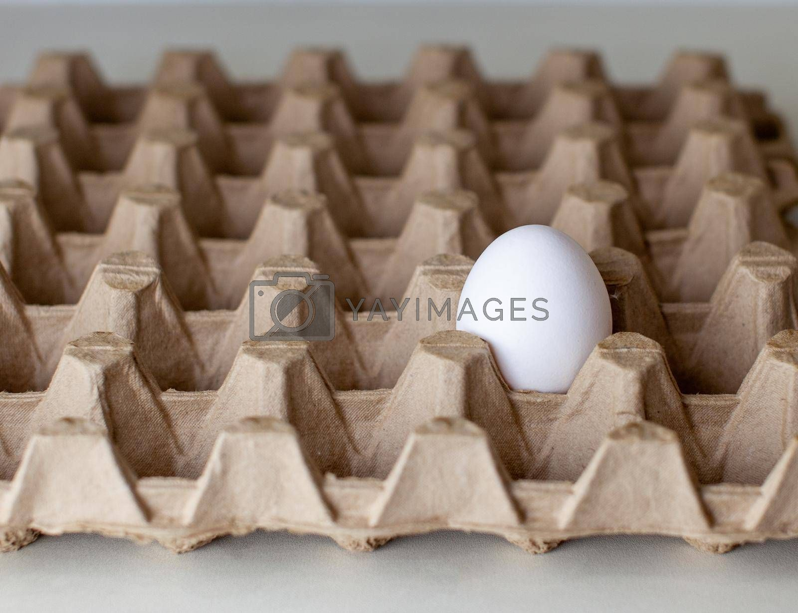 The only egg with a white shell among the empty cells of a large cardboard package, a chicken egg as a valuable nutritious product, the last egg from the tray for carrying fragile items
