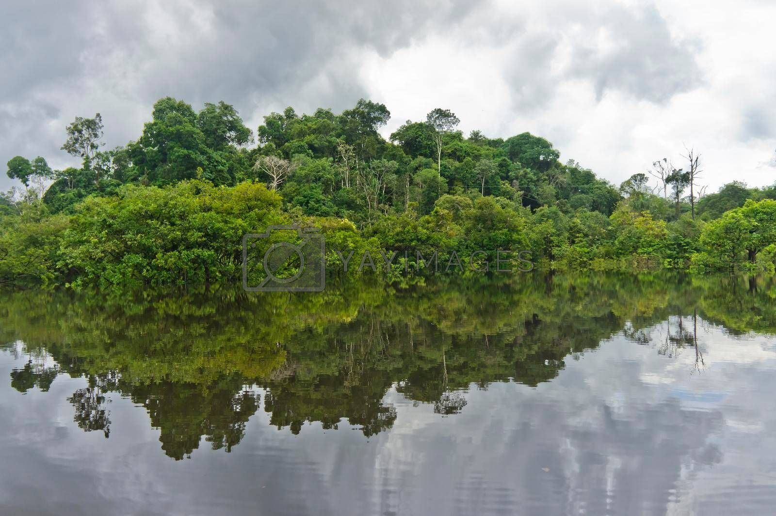 Royalty free image of Amazon river reflection, Brazil, South America by giannakisphoto
