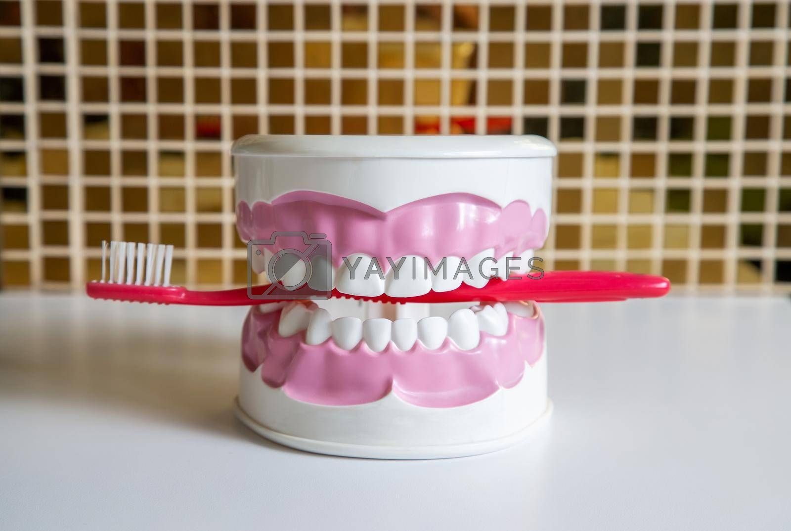 Clean teeth dental jaw model and red thooth brush on the table in dentists office. The concept of proper oral care, caries hygiene.
