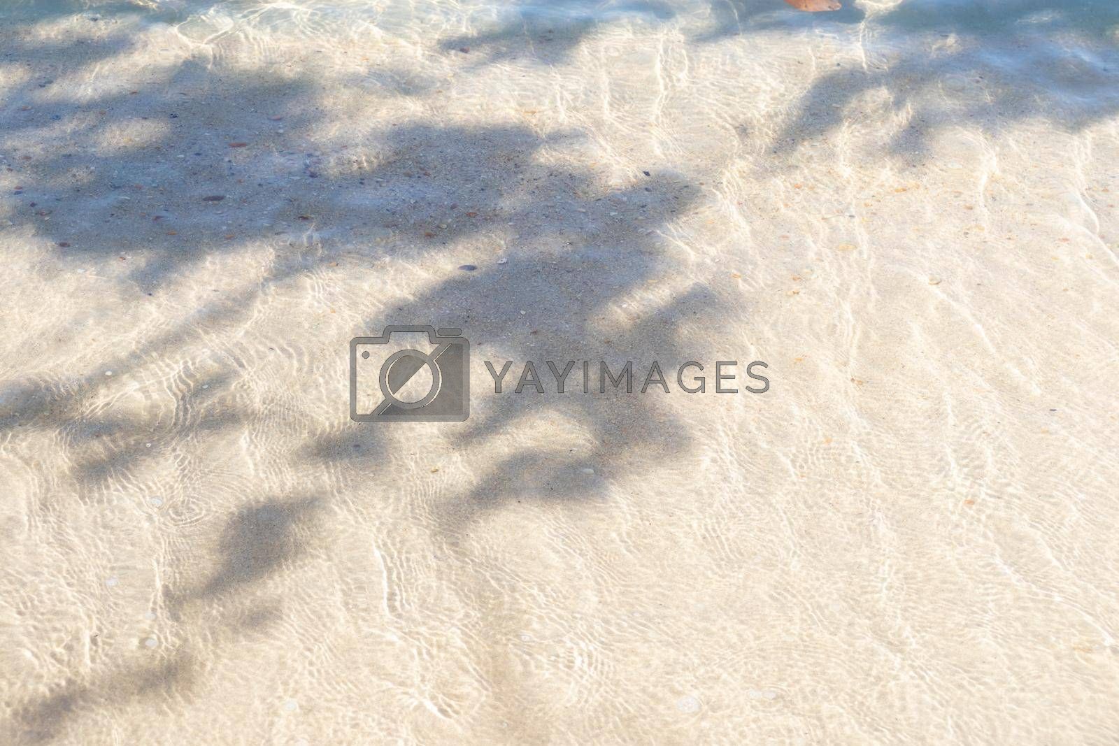 Shadow of tree leaves on the tropical beach in summer.