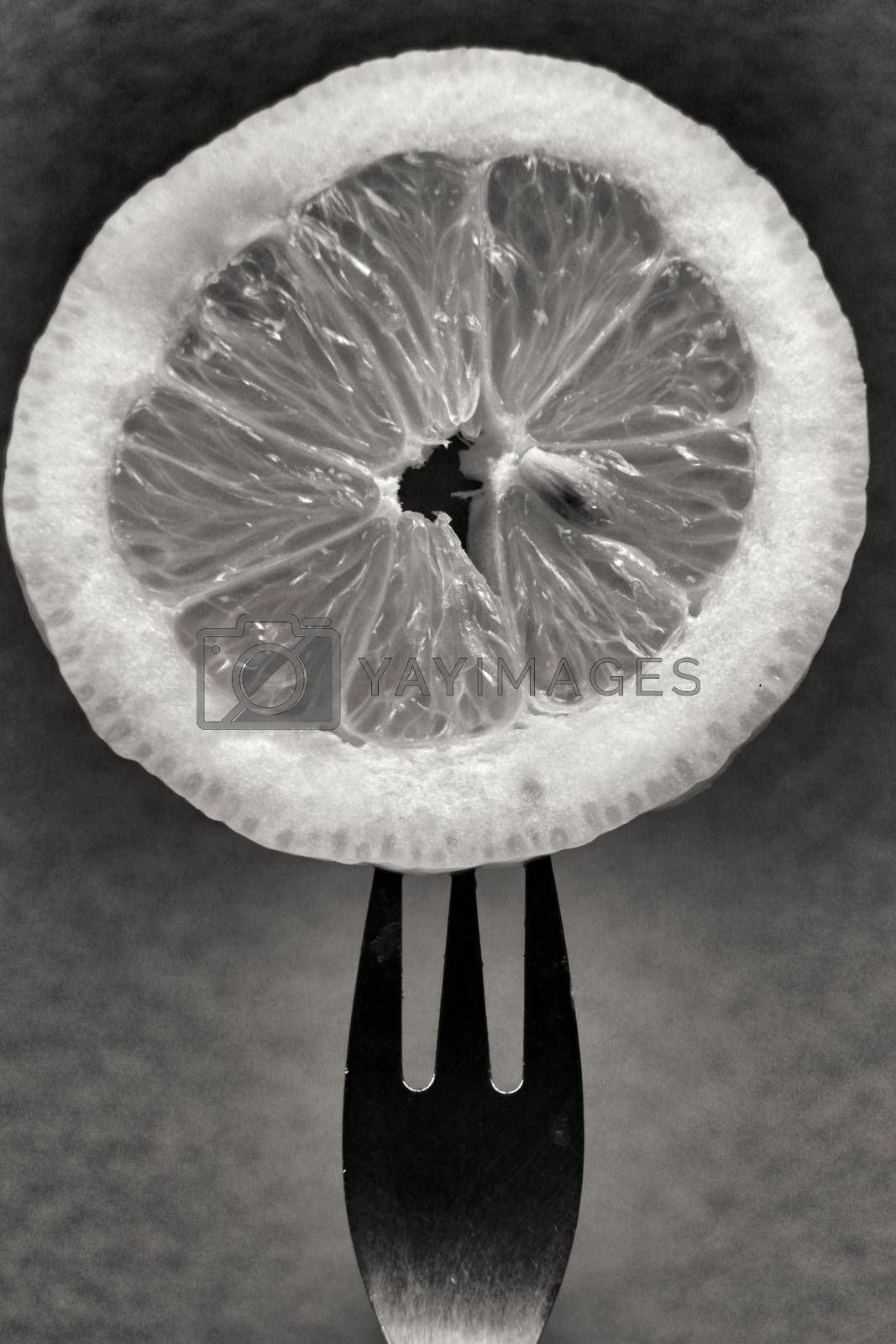 Slice of lemon pricked on fork. Monochrome photography.
