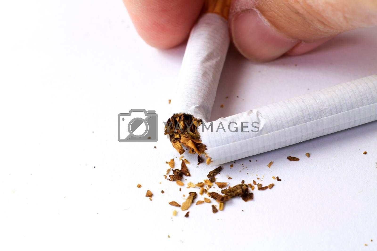 Hand holding Broken cigarette on white background. Stop smoking concept photography.