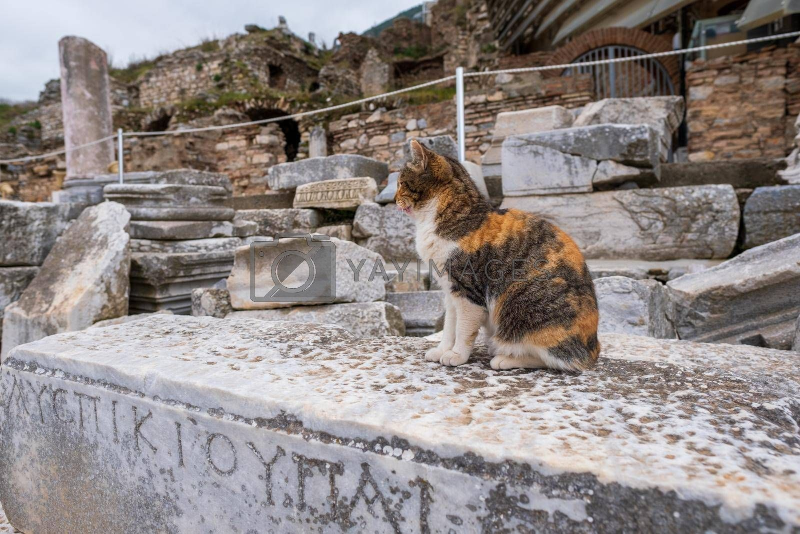 horizontal view of a multicolored cat lying on a historical monument