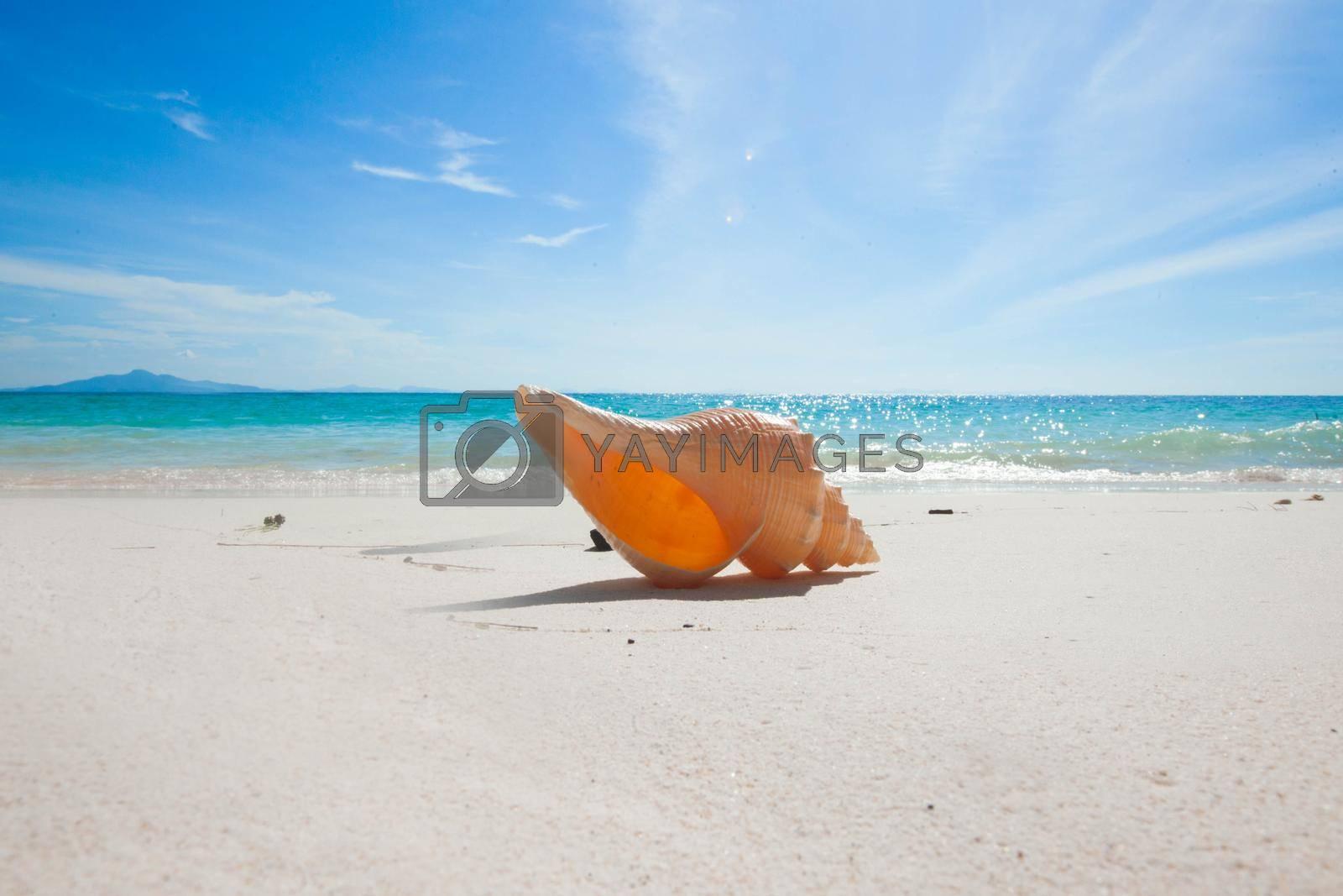 One big seashell on tropical beach close-up