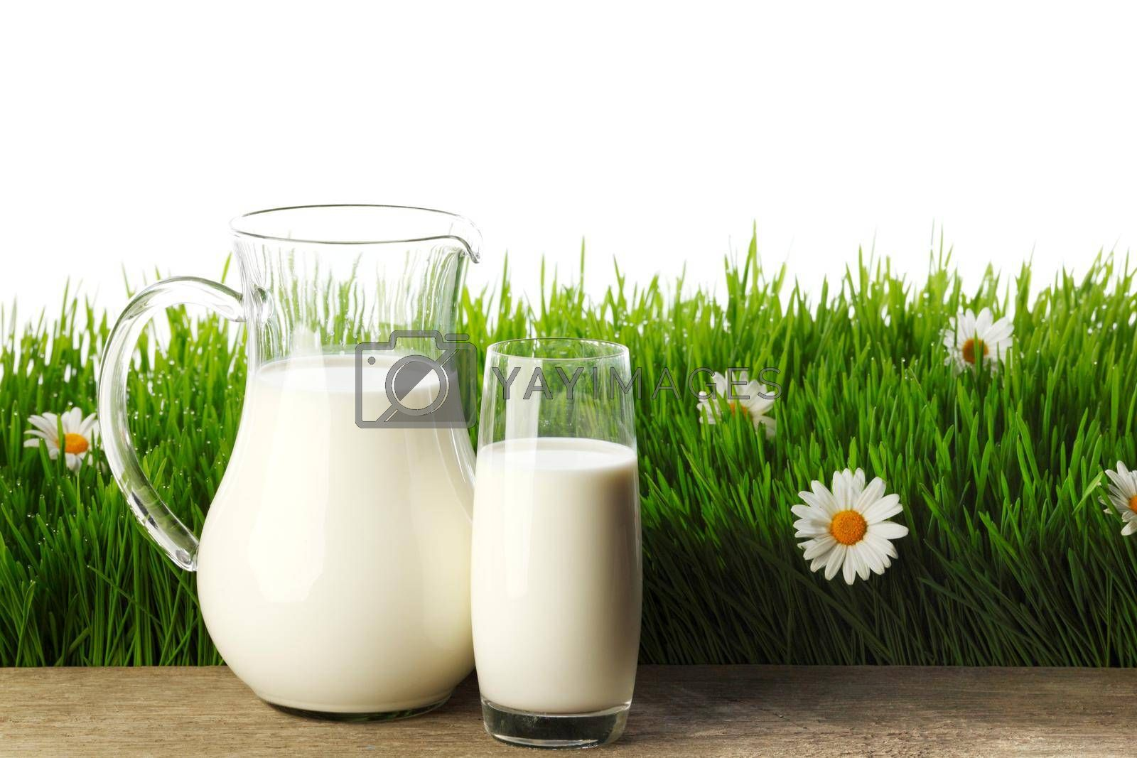 Milk jug and glass on fresh green grass with chamomiles isolated on white
