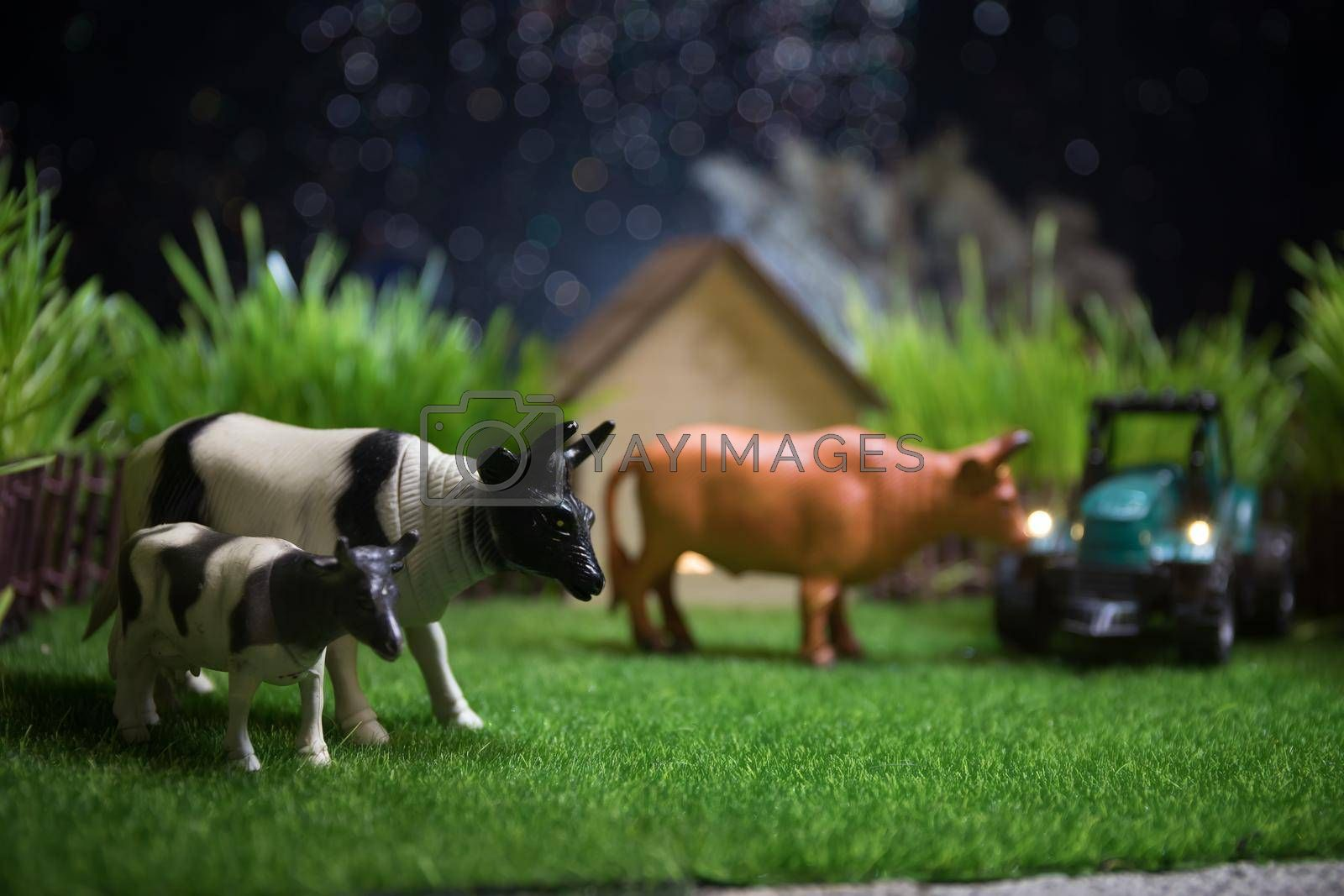 Herd of cows in the farm. Farm (village) life concept. Decorative toy figures at night. Selective focus