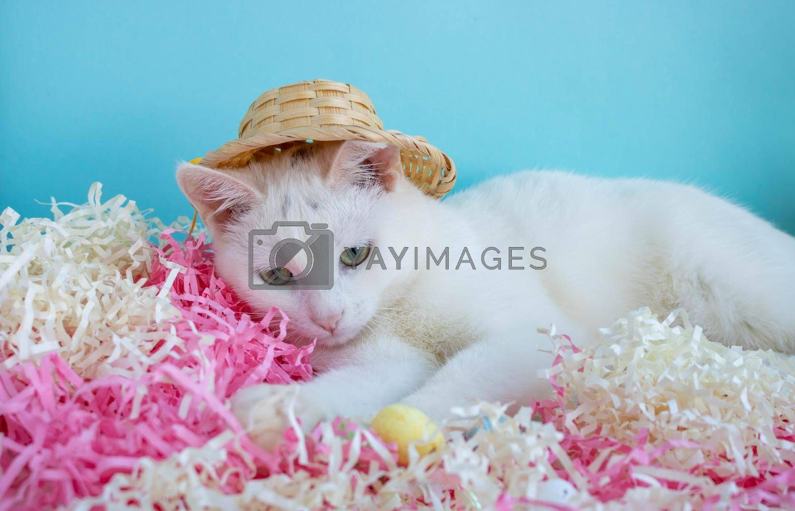 A cute white cat in a straw hat is lying on the tinsel next to the eggs. Easter Concept.