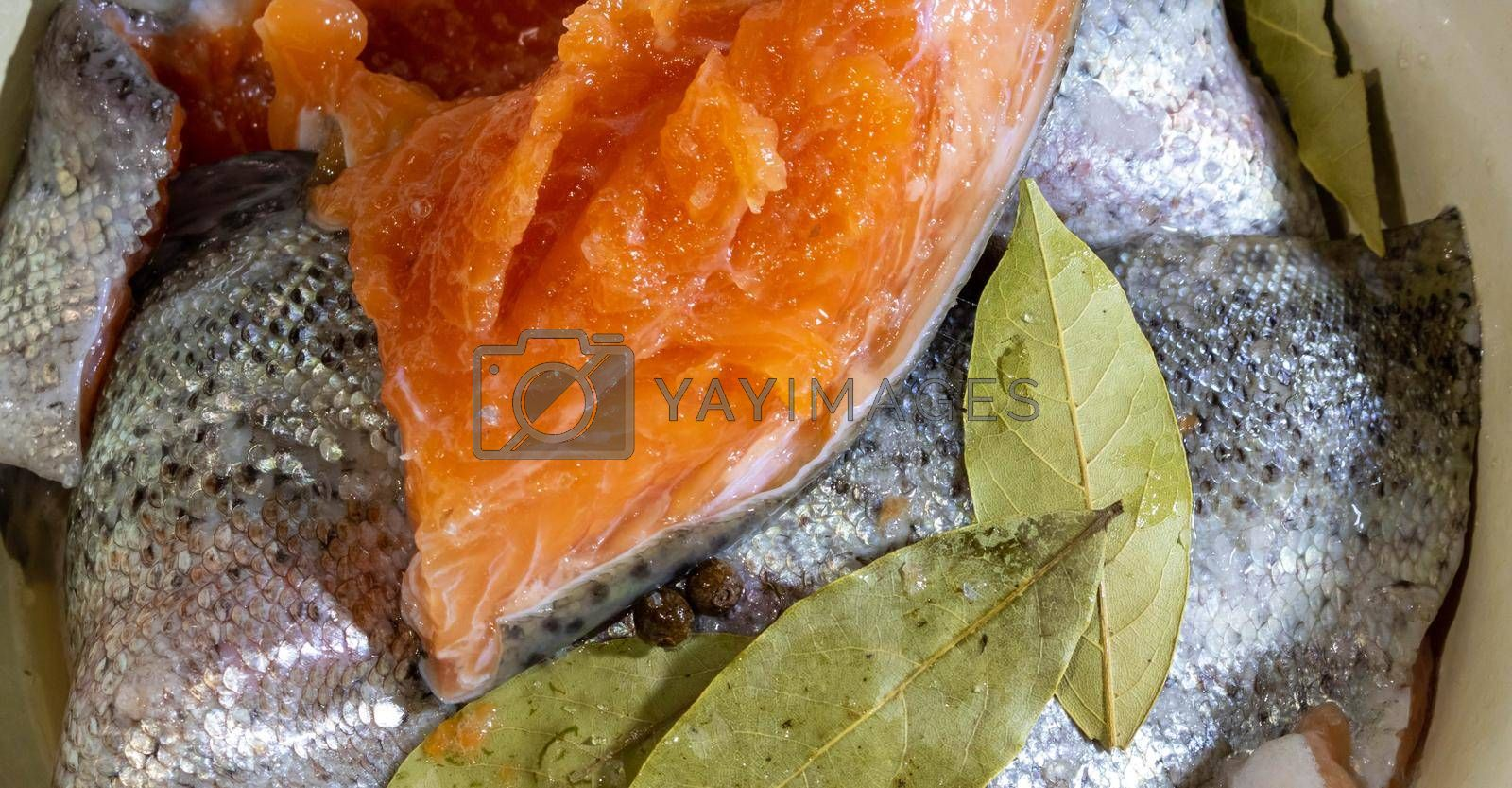 Royalty free image of Salting fresh trout. Pieces of salted trout with salt by lapushka62