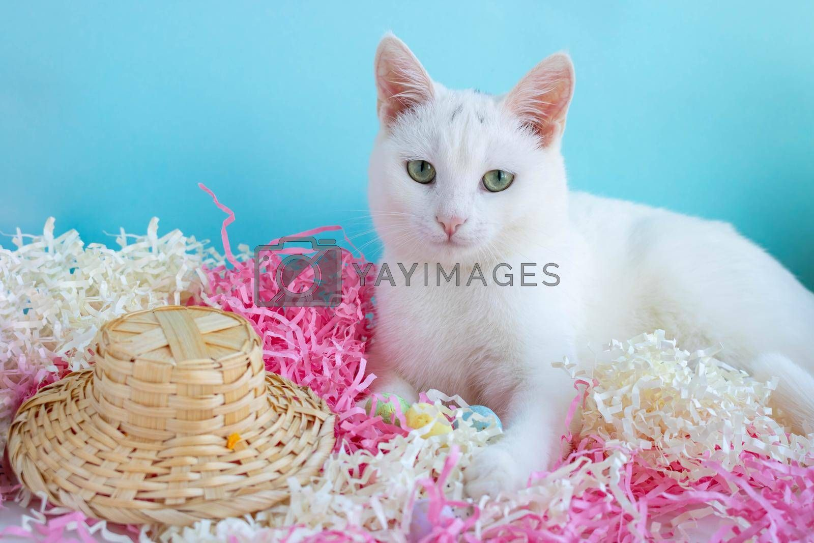 Royalty free image of A cute white cat lies on the tinsel next to eggs and a straw hat. Easter Concept by lapushka62