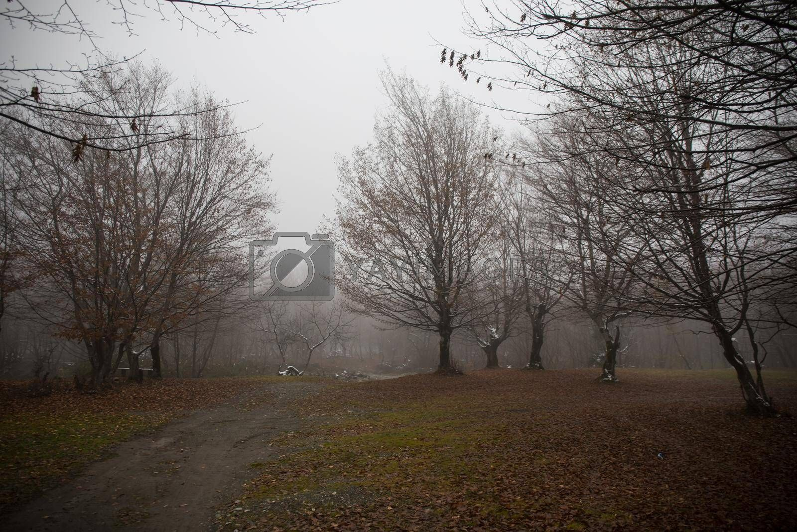 Royalty free image of Landscape with beautiful fog in forest on hill or Trail through a mysterious winter forest with autumn leaves on the ground. Road through a winter forest. Magical atmosphere. Azerbaijan nature by Zeferli