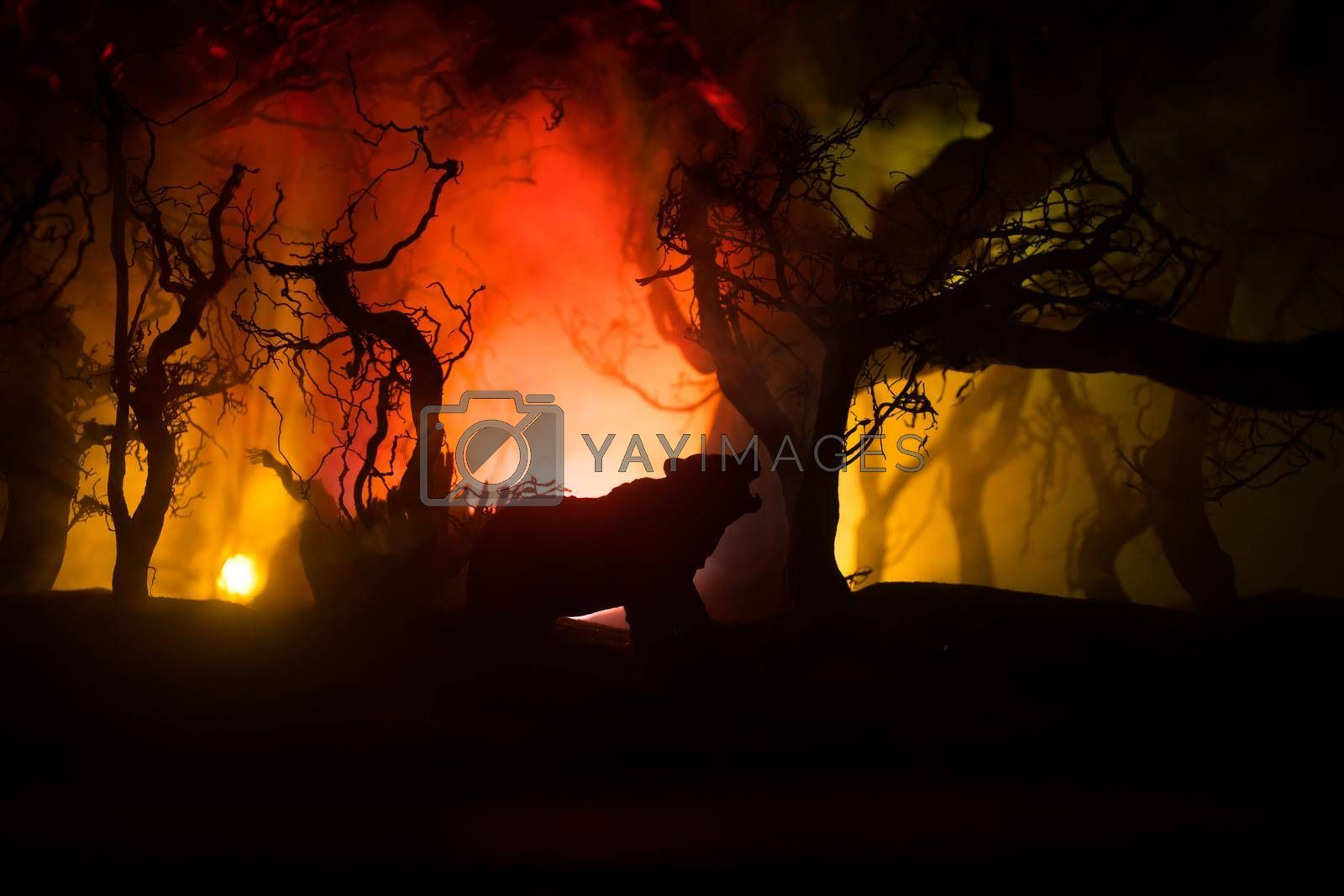Horror view of big bear in dead forest at night. Angry bear behind the fire cloudy sky. The silhouette of a bear in foggy forest dark background