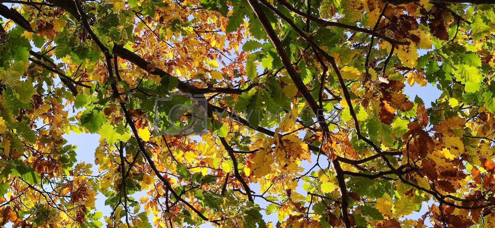 Colored leafs in autumn