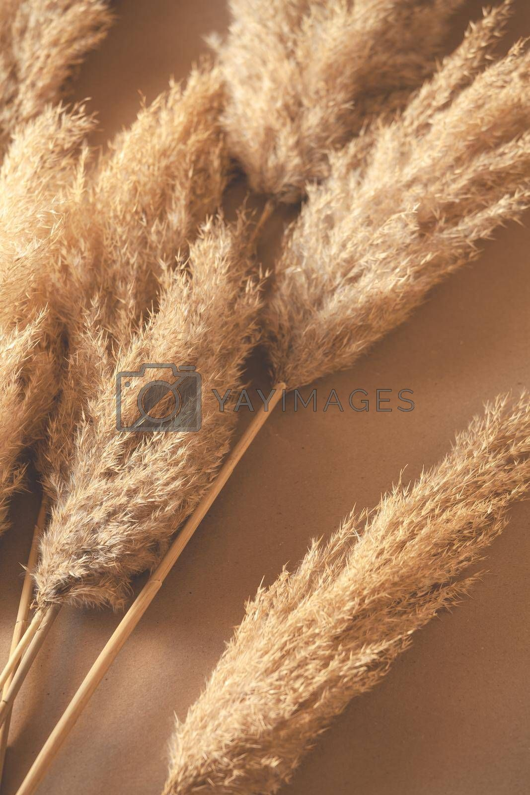 Decorative Branches Of Pampas Grass Set On The Floor
