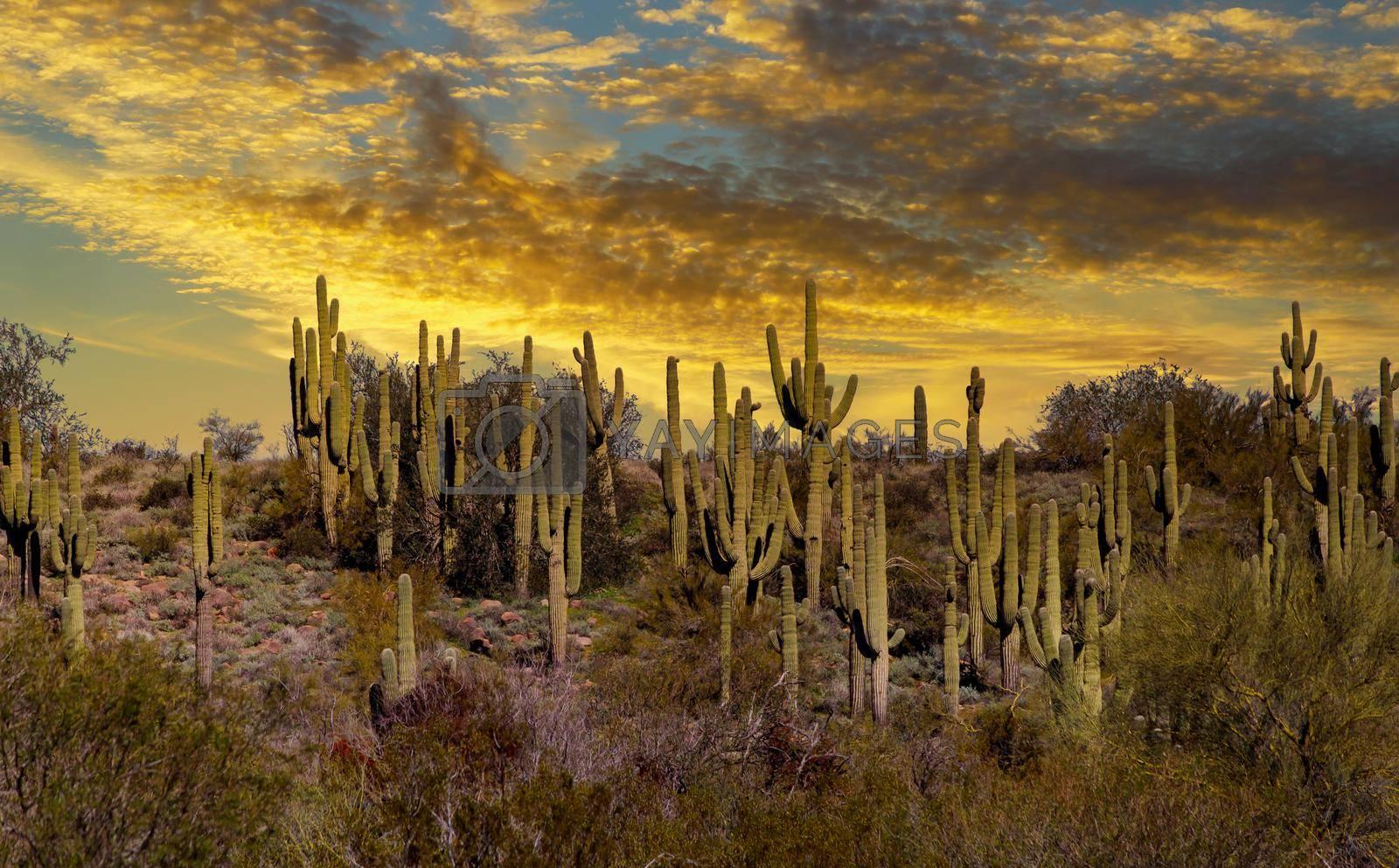 Late light illuminates sunset at near Tucson Arizona with desert of cactus