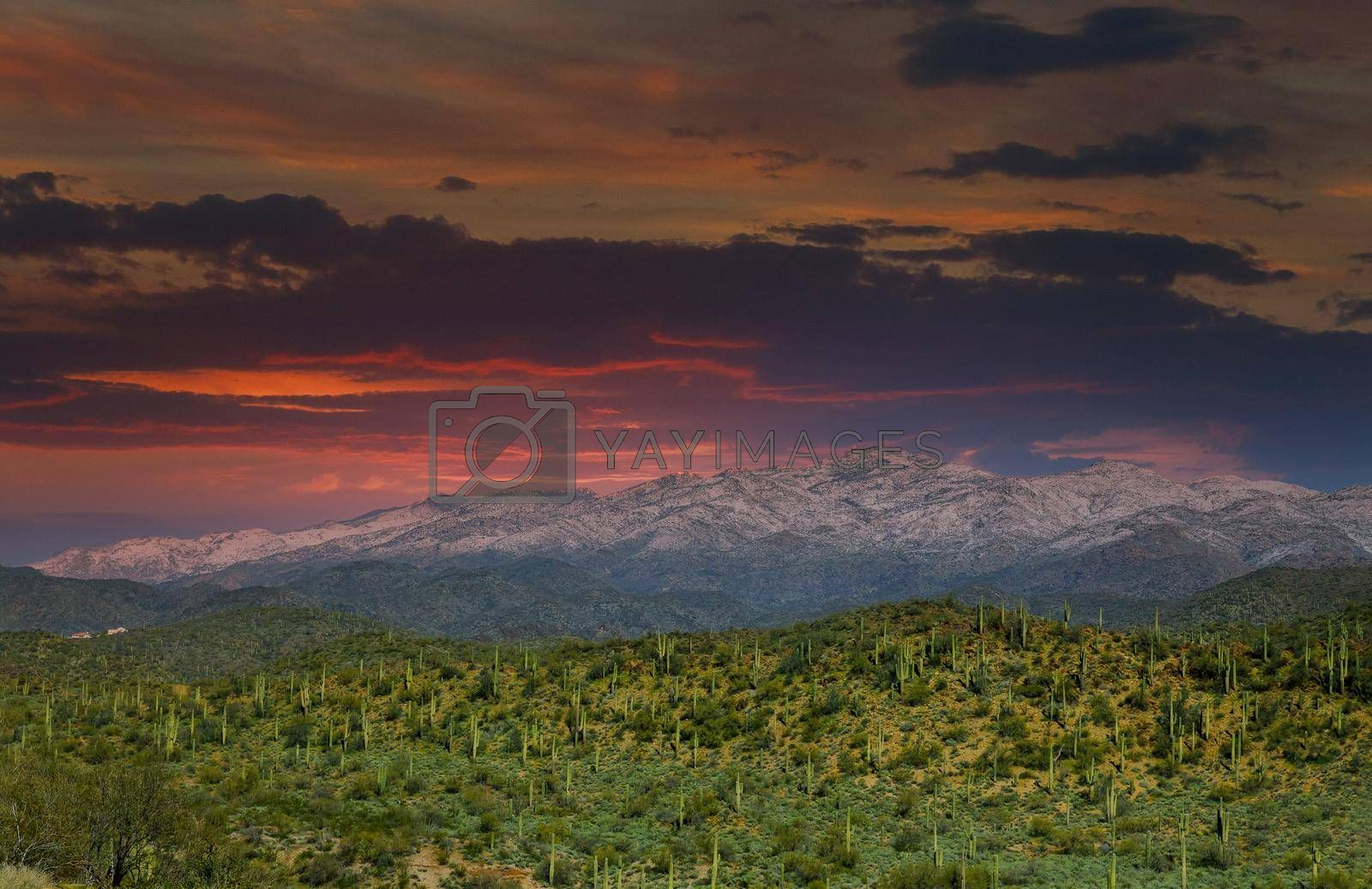 Arizona desert landscape with snow covered mountains in the cactus at sunset near Phoenix, Arizona US