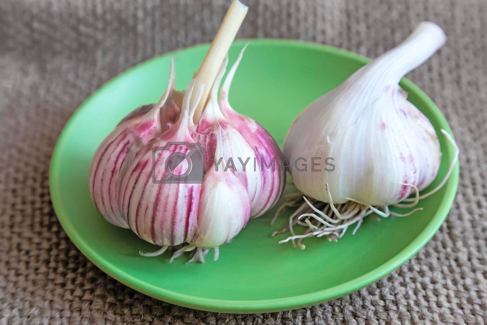 On the table the green plate are two bulbs of garlic.