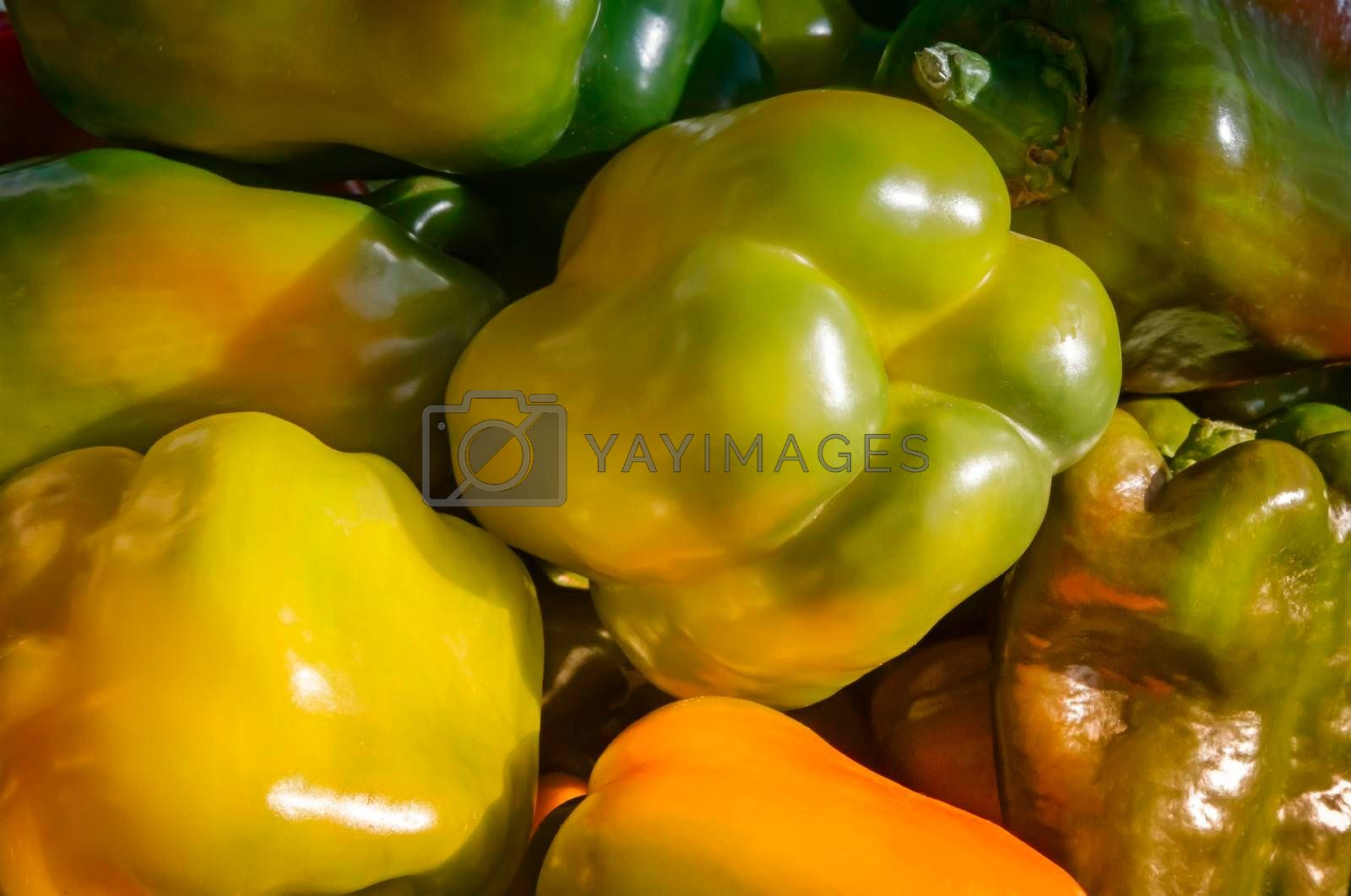 Large fruit ripe yellow pepper. Presents closeup.