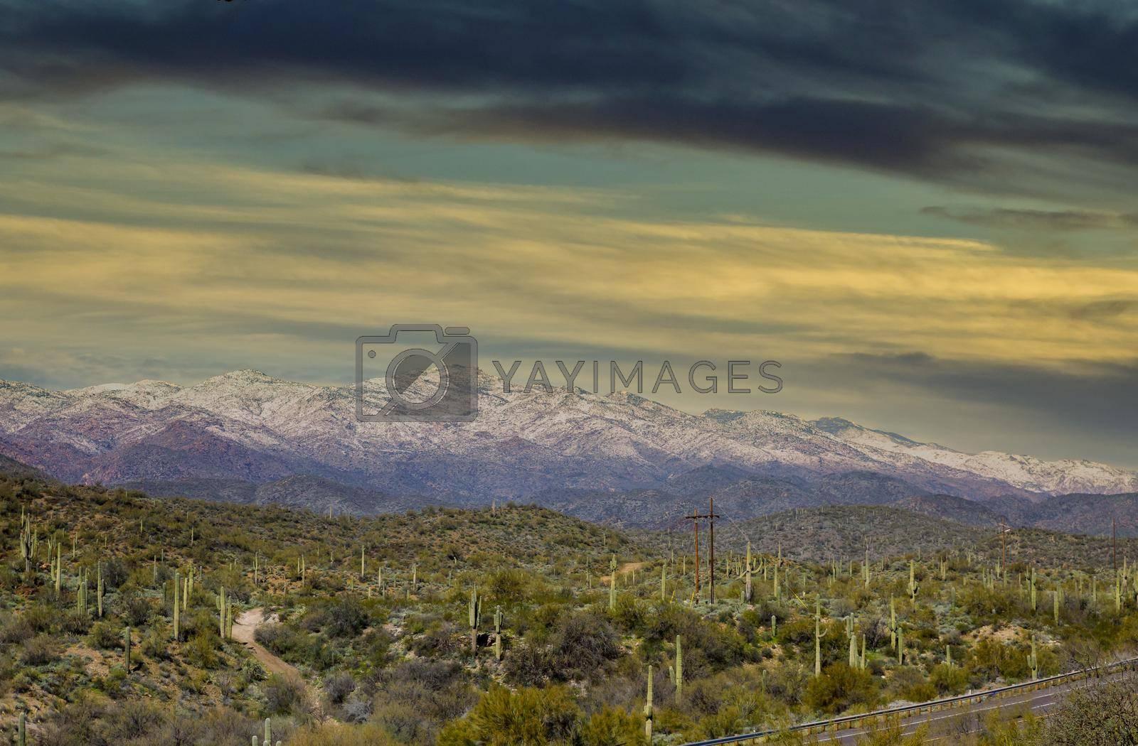 Arizona desert landscape with saguaro cactus at sunset with snow covered mountains near Phoenix, Arizona
