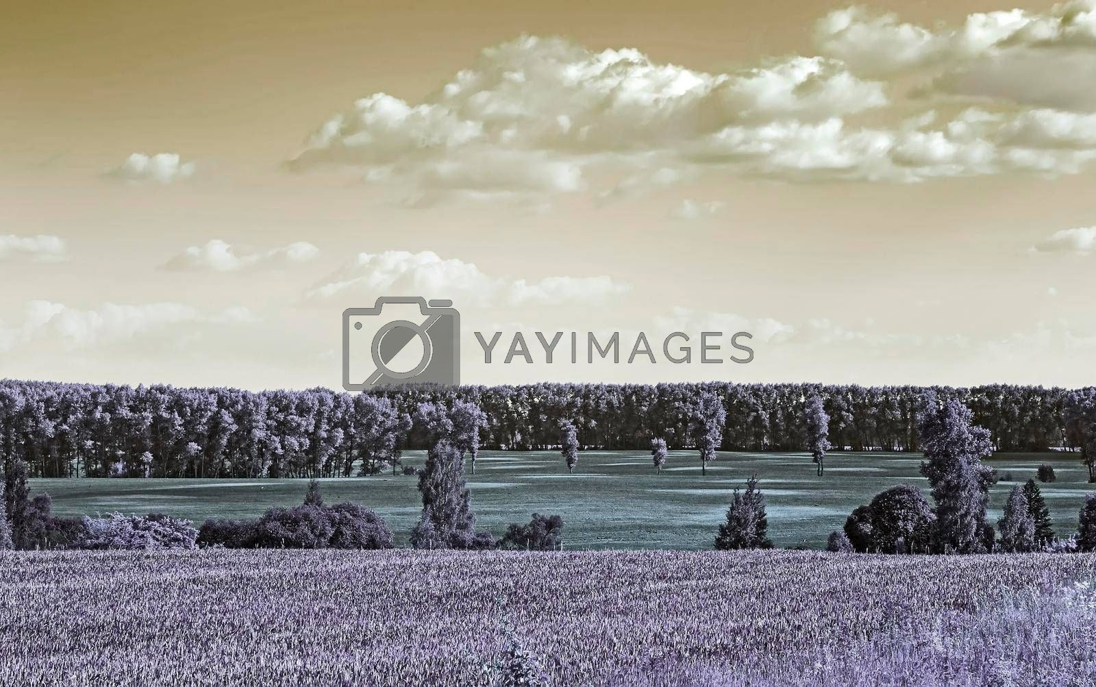 Royalty free image of Summer landscape on a clear Sunny day. by georgina198