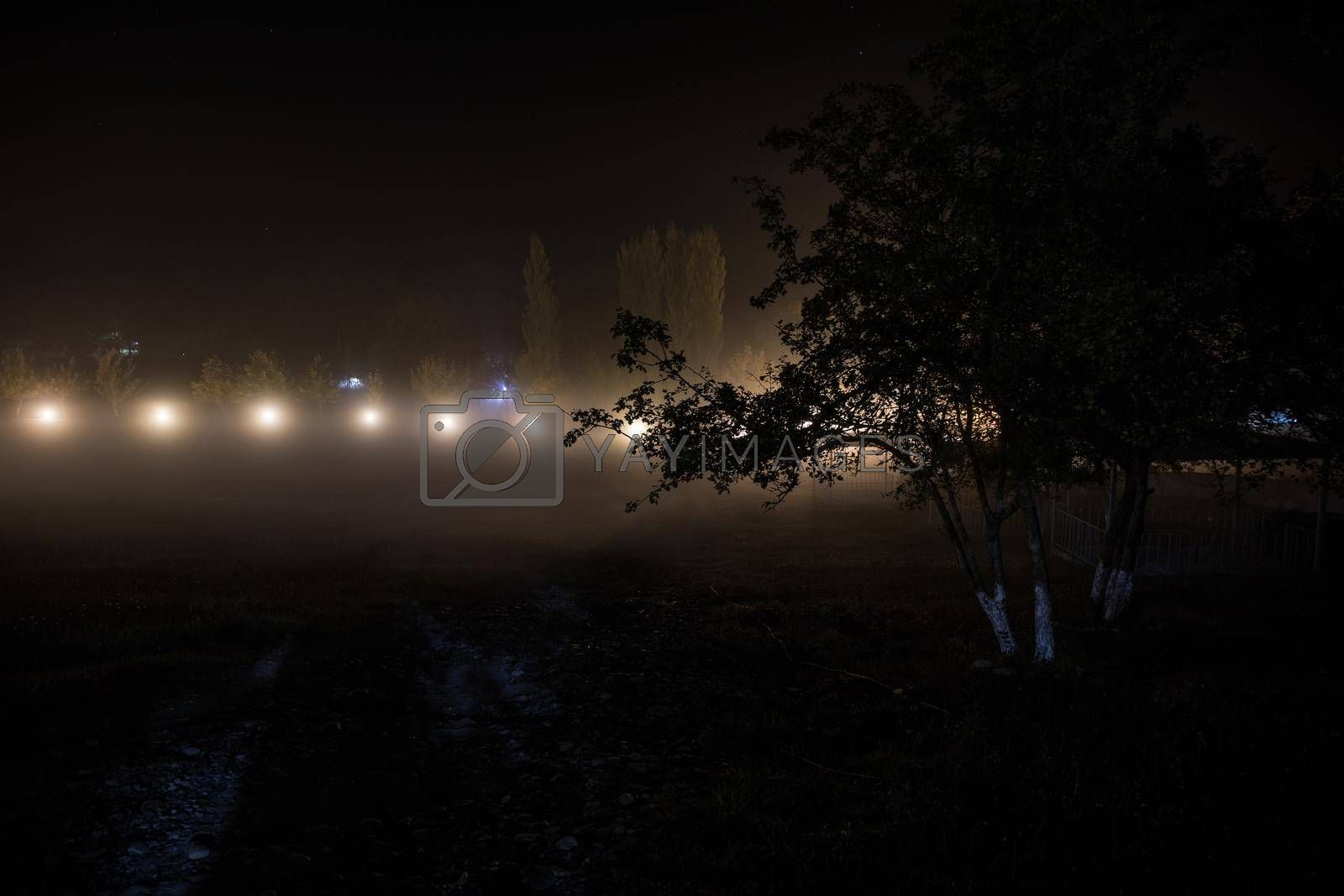 Trees and street lamps on a quiet foggy night. Foggy misty evening lamps in empty road at forest.