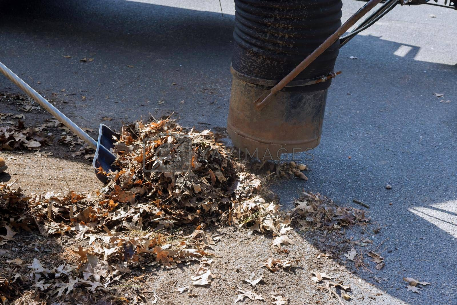 Municipal cleaning service for falling leaves being vacuum up on city street in autumn