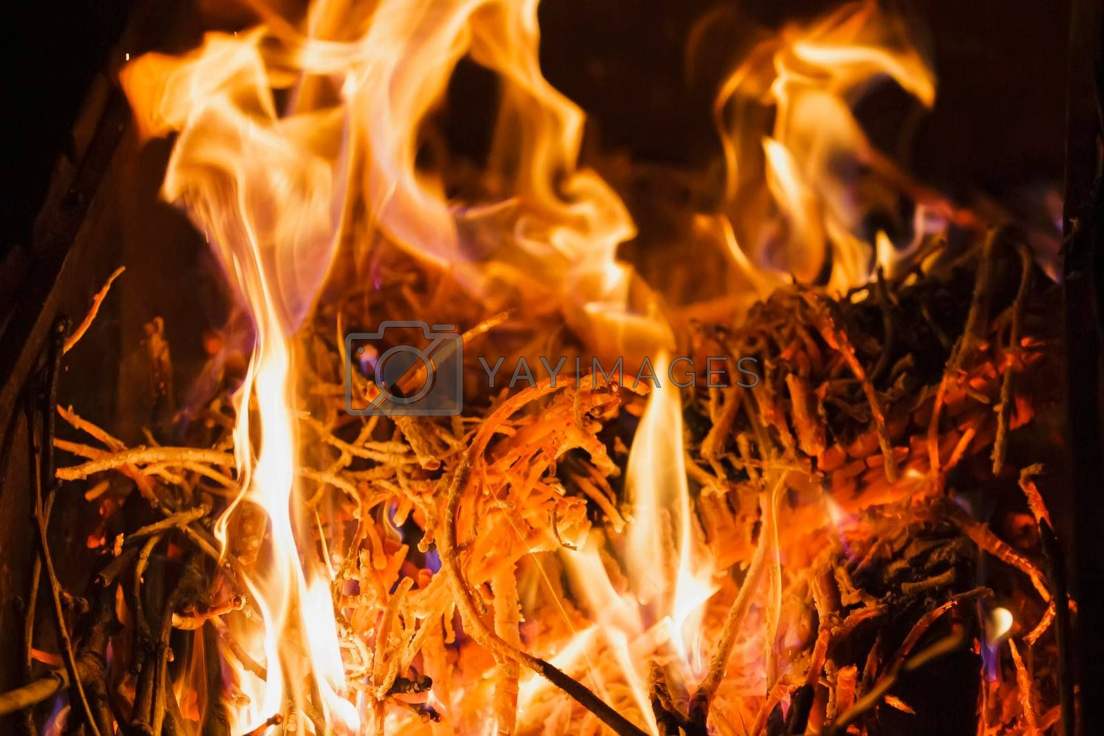 Flame of fire in the dark. The fire burns coals and tree branches.