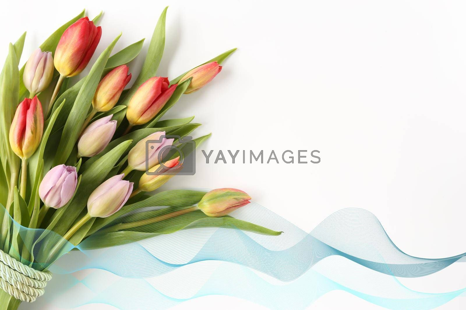Bouquet of spring tulips on a white background with green ribbon. Isolated, copy space. Banner, cards, wallpaper, flyer, invitation, Mother's day, Women's Day, Easter, Valentines day .Greeting card.
