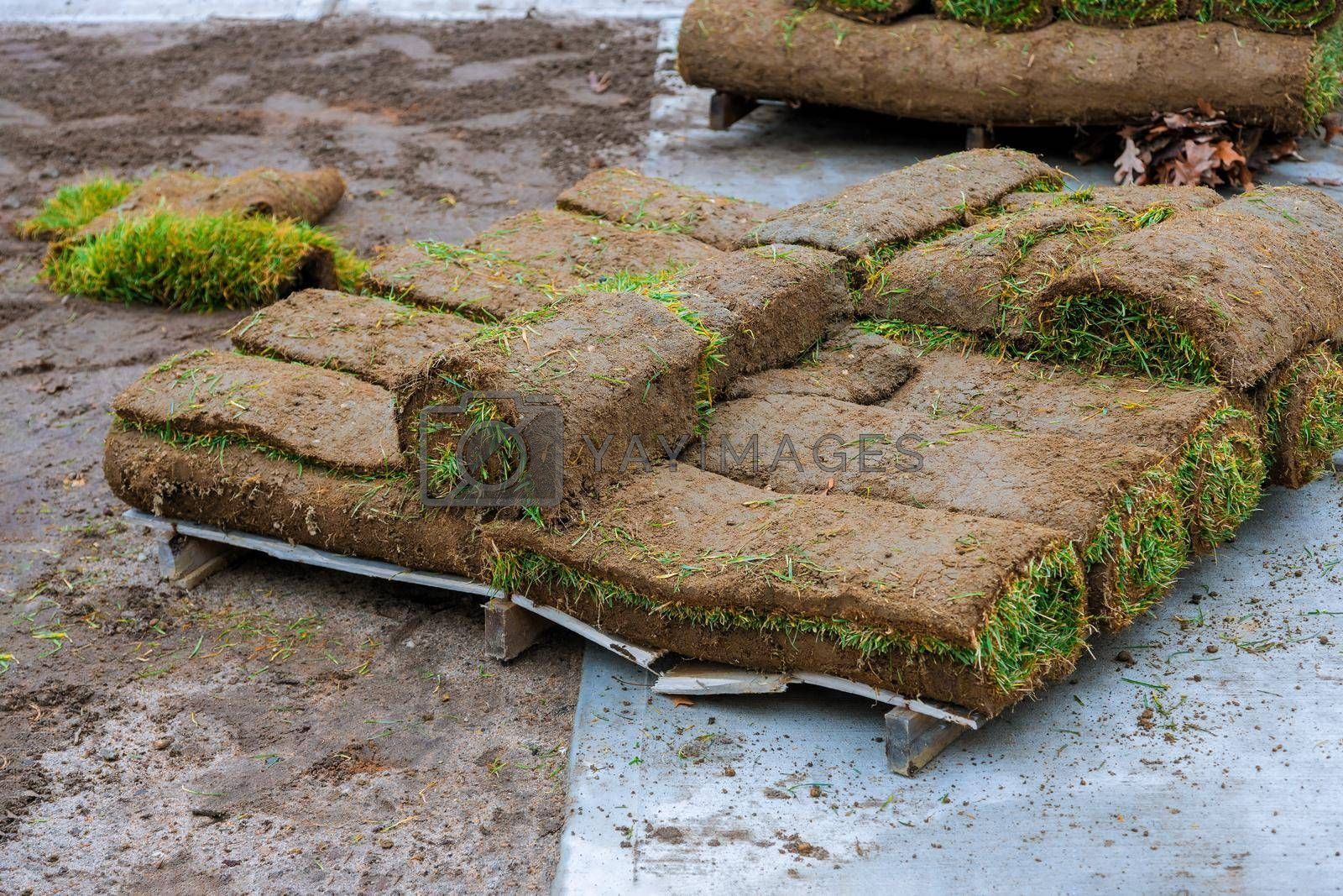 Stack of turf grass rolls a lawn fresh grass to decorate landscape design