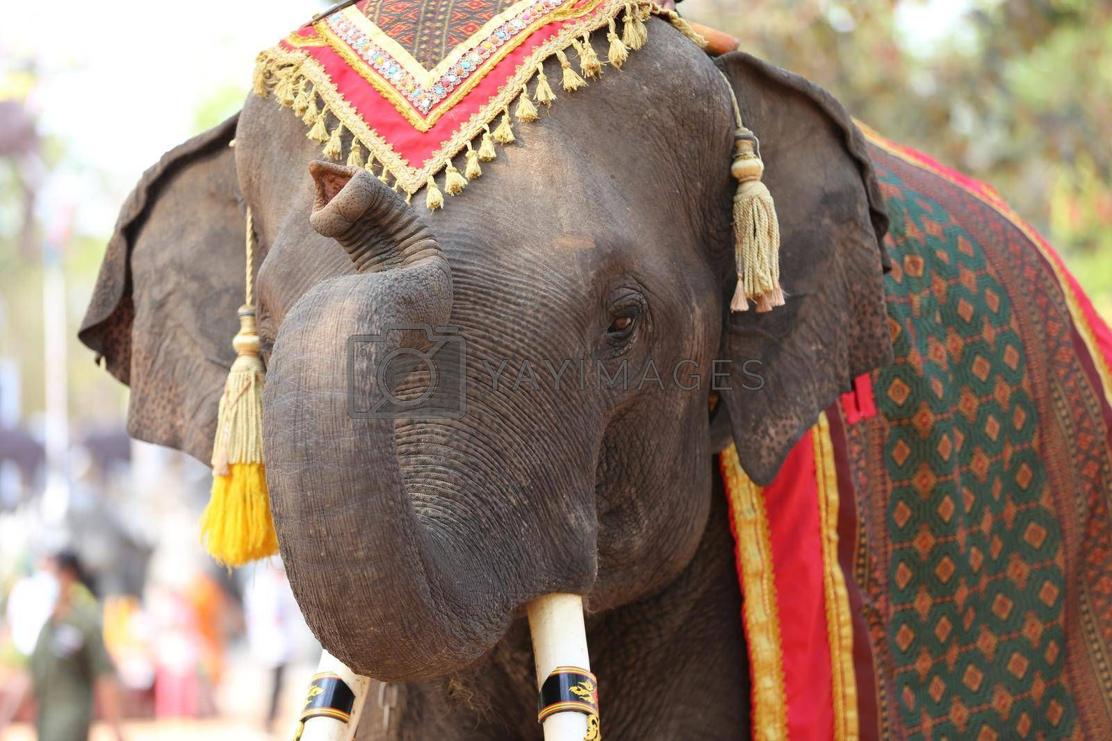 Royalty free image of Portrait of Elephant and mahout in the forest. by chuanchai
